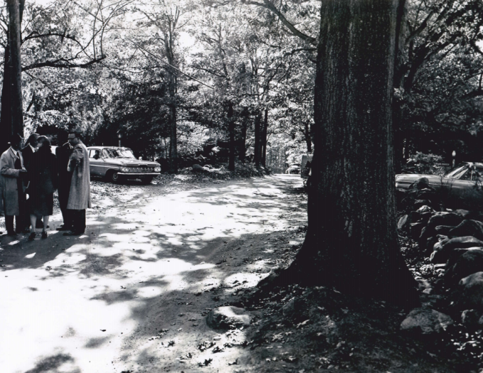 joan-risch-driveway-tree